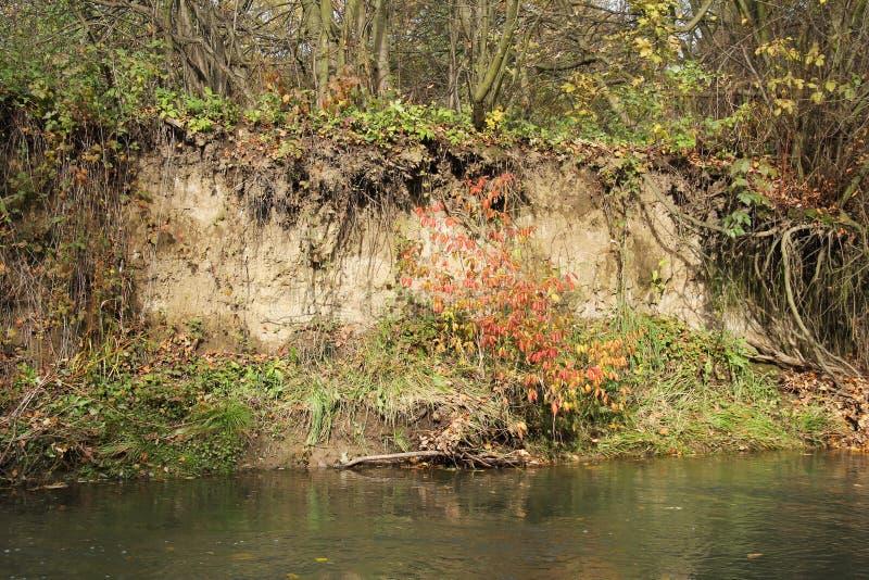 Banca insidiata del fiume immagini stock libere da diritti