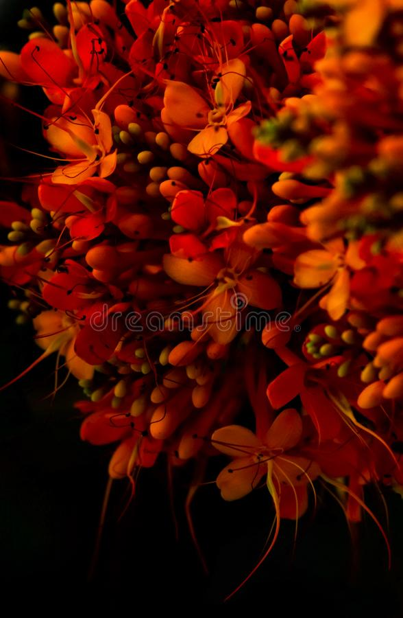 Banch van rode bloemen stock afbeelding