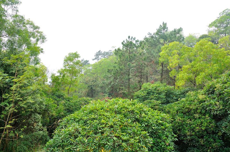 Banchang Mountain forest royalty free stock photography