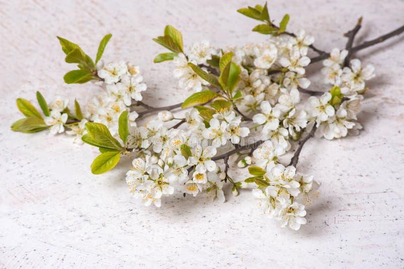 Banches florecientes del ciruelo primeras flores de la primavera en el fondo de mármol blanco imagenes de archivo