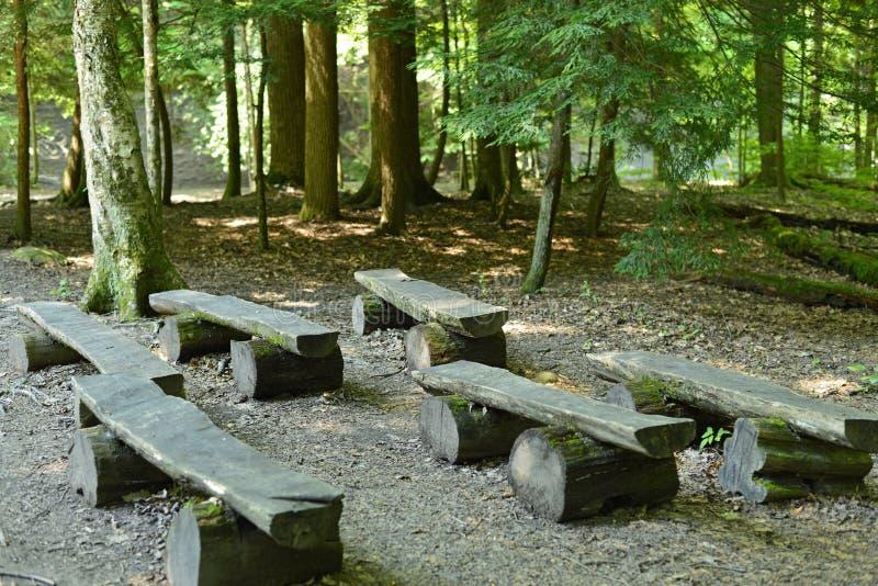 Banchi vuoti nella foresta immagini stock libere da diritti