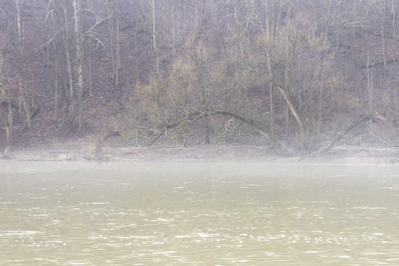 Banco íngreme da floresta do inverno que conduz para baixo a um rio com névoa clara imagem de stock royalty free