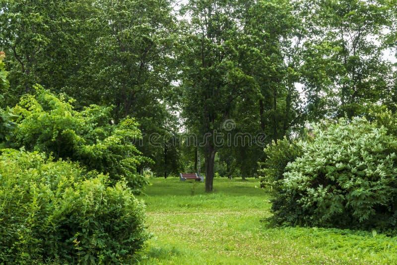 Banco acolhedor nas profundidades do parque verde do verão imagens de stock royalty free