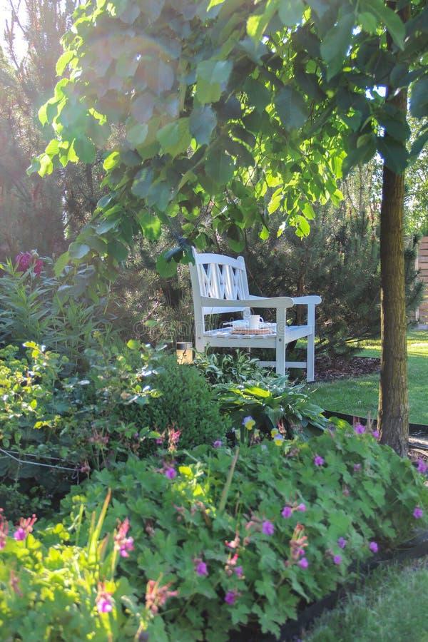 Banco blanco en un jardín verde del verano en la luz de igualación fotos de archivo libres de regalías