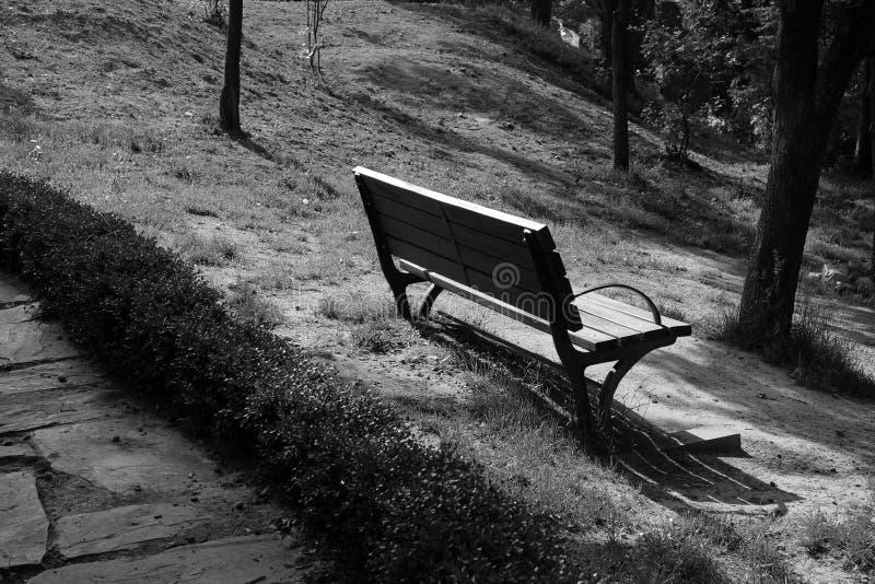 Banco blanco y negro en el bosque imágenes de archivo libres de regalías