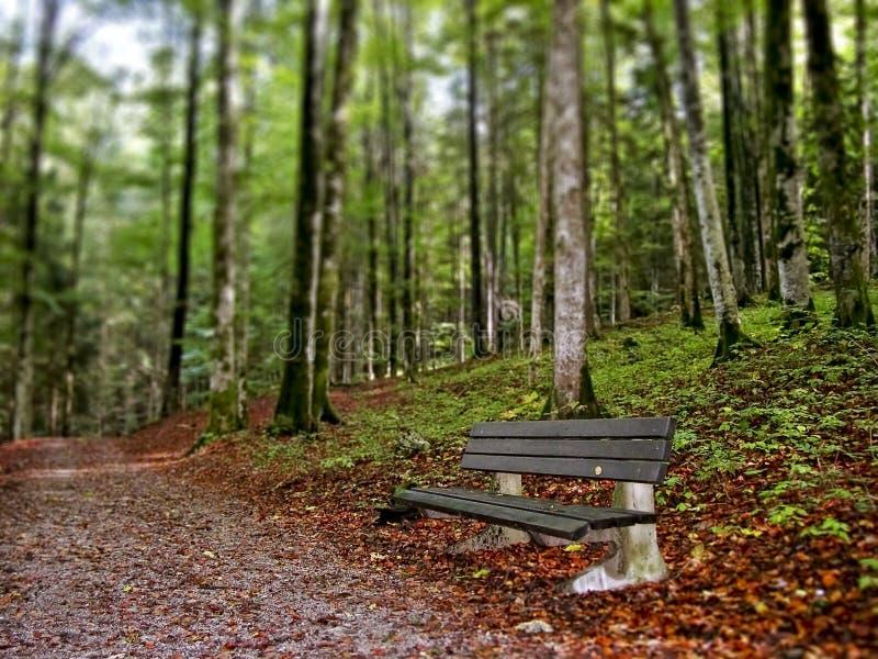 Banco calmo lungo il sentiero per pedoni della foresta immagini stock