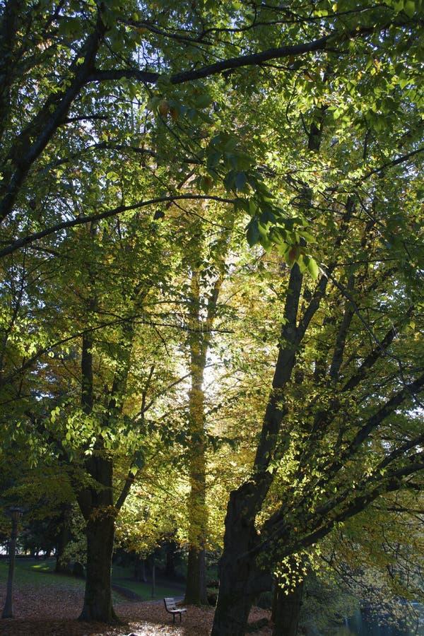 Banco con el árbol silueteado imagenes de archivo