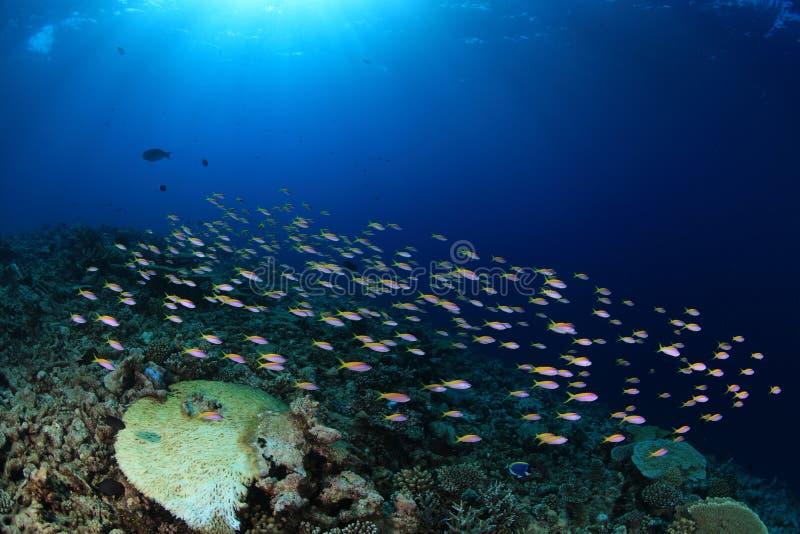 Banco de areia de peixes pequenos imagens de stock