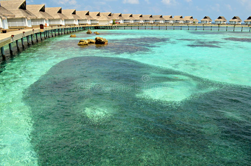 Banco de areia de peixes pequenos em torno das casas de campo luxuosas da água, Maldivas foto de stock royalty free