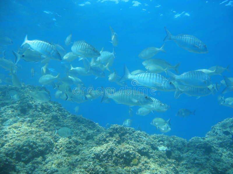 Banco de areia dos peixes com a rocha no mar Mediterrâneo foto de stock