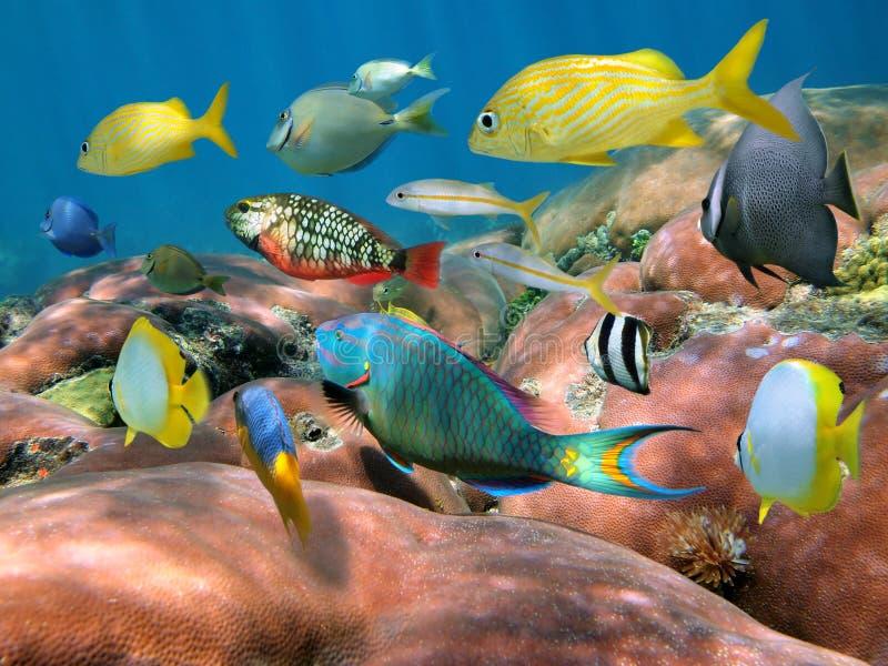 Banco de areia dos peixes sobre um recife coral imagem de stock