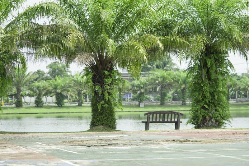 Banco de la piscina en el parque o el jardín fotos de archivo libres de regalías