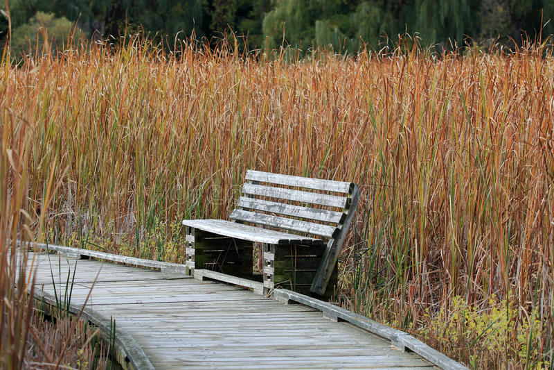 Banco de madeira ao longo de um passeio à beira mar em um pântano fotografia de stock royalty free