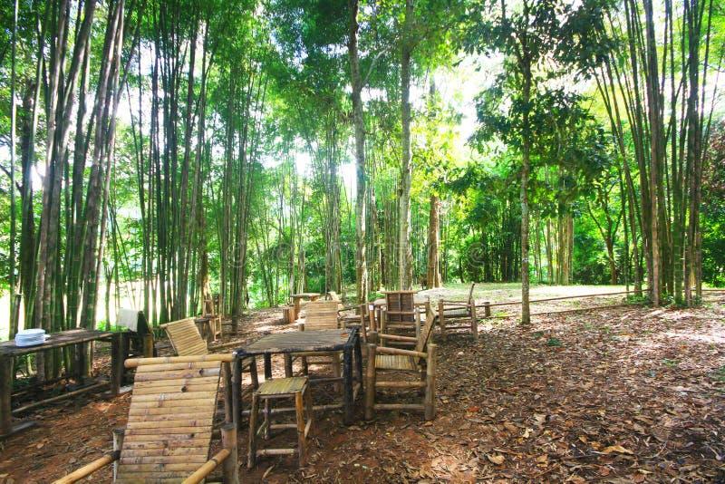 Banco de madeira e tabela no lugar da floresta para descansar para turistas fotografia de stock royalty free
