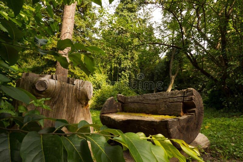 Banco de madeira nas madeiras imagem de stock royalty free
