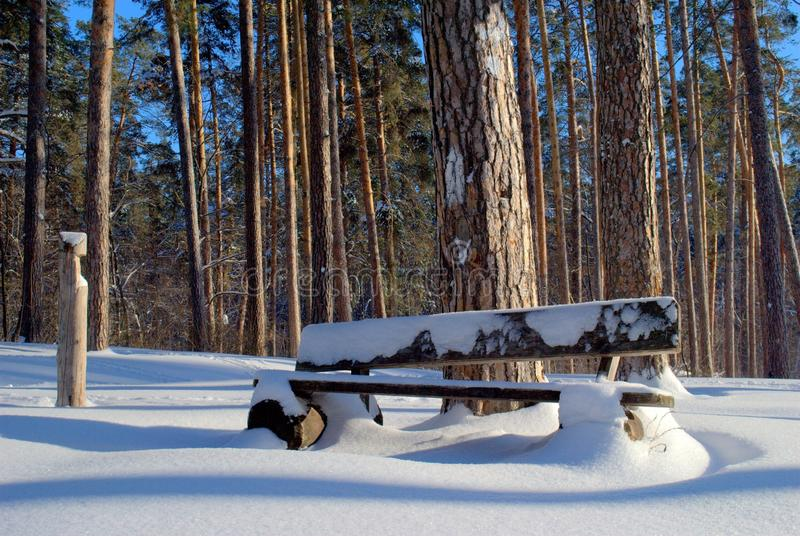 Banco de madeira velho em uma floresta do pinho coberta com a neve fotografia de stock royalty free