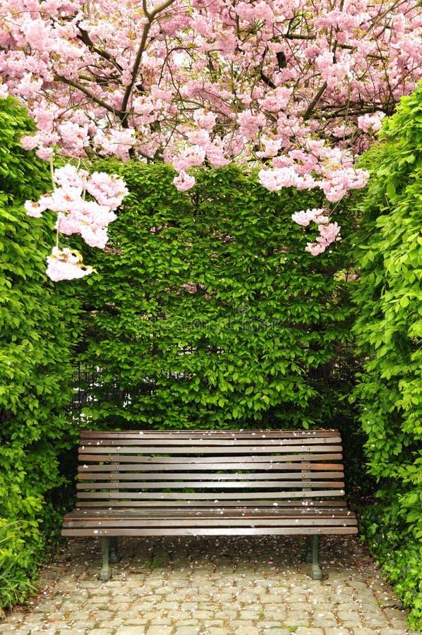 Banco de madera del jardín fotos de archivo libres de regalías
