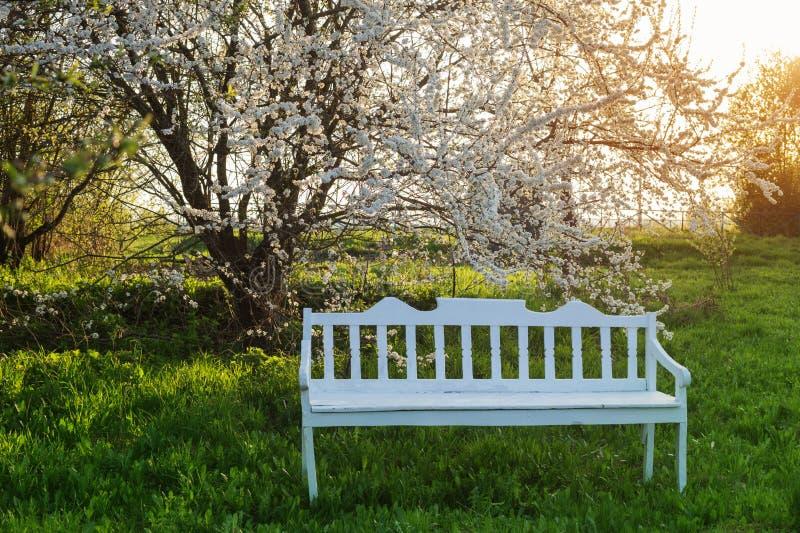 banco de madera en huerta de la primavera fotos de archivo libres de regalías