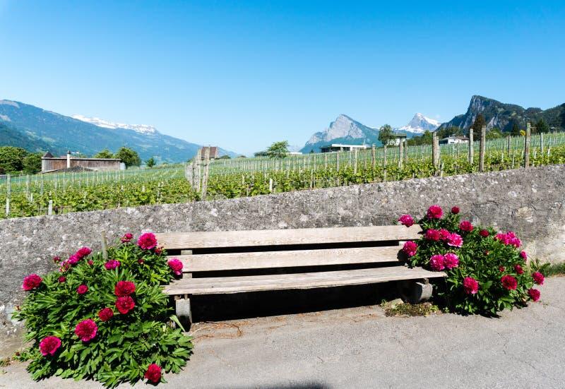 Banco de madera rústico viejo embalado por las flores florecientes del rojo hermoso contra una pared de la roca que embala un viñ foto de archivo libre de regalías