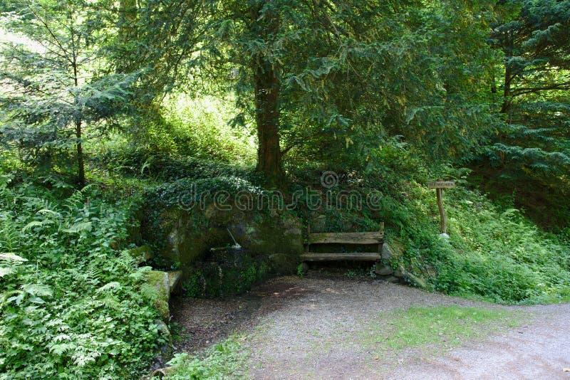 Banco de madera viejo y fuente de piedra en el bosque cerca de un árbol del tejo imagenes de archivo