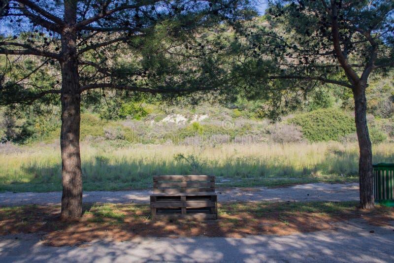 Banco de p?letes de madeira na natureza perto da estrada e dos pinheiros fotos de stock
