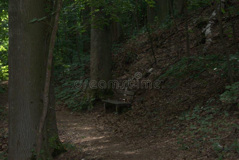 Banco de parque aislado en el medio de un bosque y rodeado por los árboles grandes fotografía de archivo libre de regalías