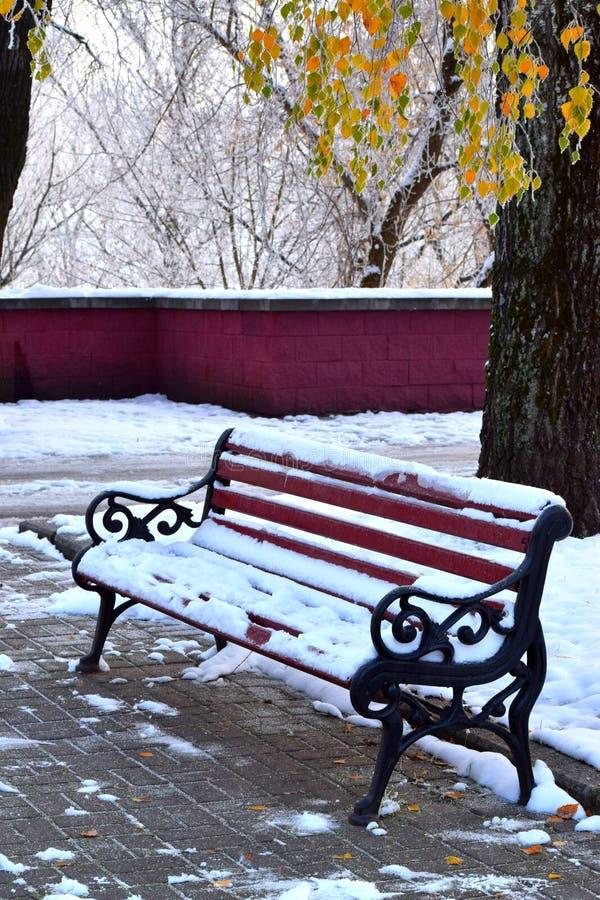 Banco de parque coberto de neve sob as folhas douradas do vidoeiro foto de stock royalty free