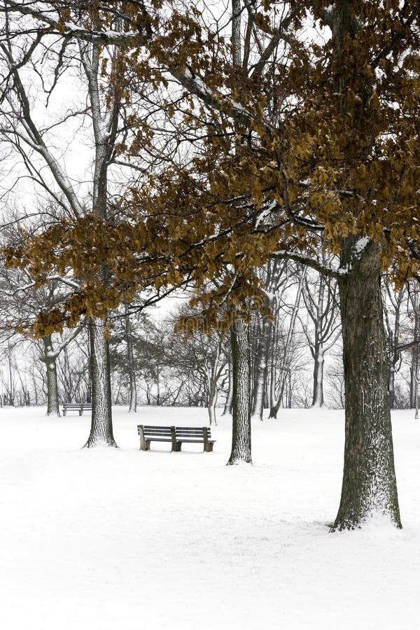 Banco de parque debajo de árboles nevados con las hojas de otoño anaranjadas encendido imagen de archivo
