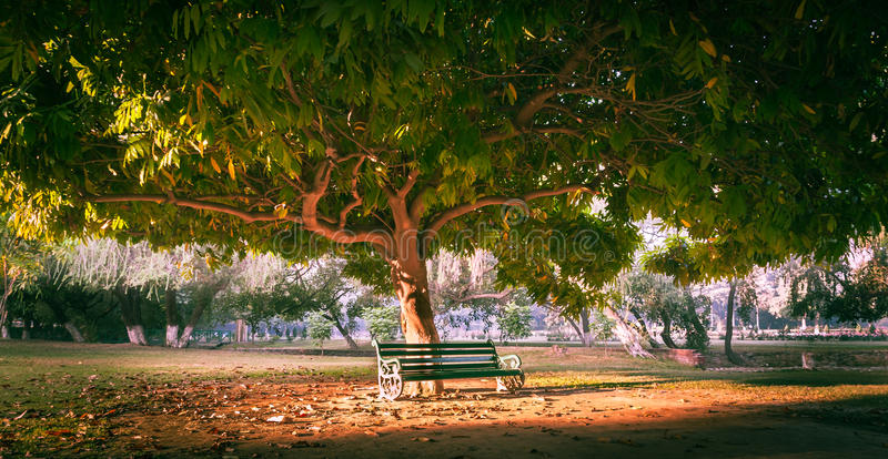 Banco de parque debajo del árbol imágenes de archivo libres de regalías