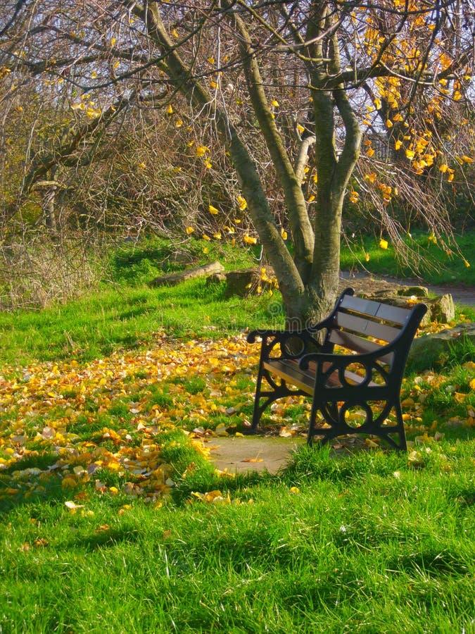 Banco de parque debajo del árbol con las hojas otoñales en la tierra, retrato imágenes de archivo libres de regalías