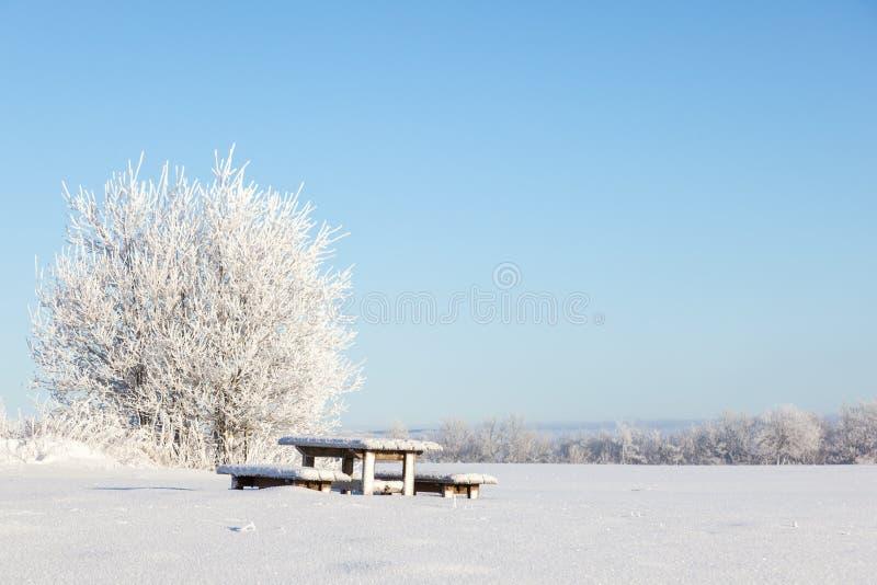 Banco de parque do inverno fotografia de stock