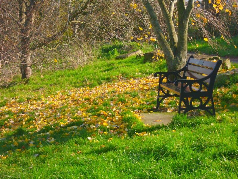 Banco de parque moderno al lado de un árbol con las hojas otoñales, paisaje fotografía de archivo libre de regalías