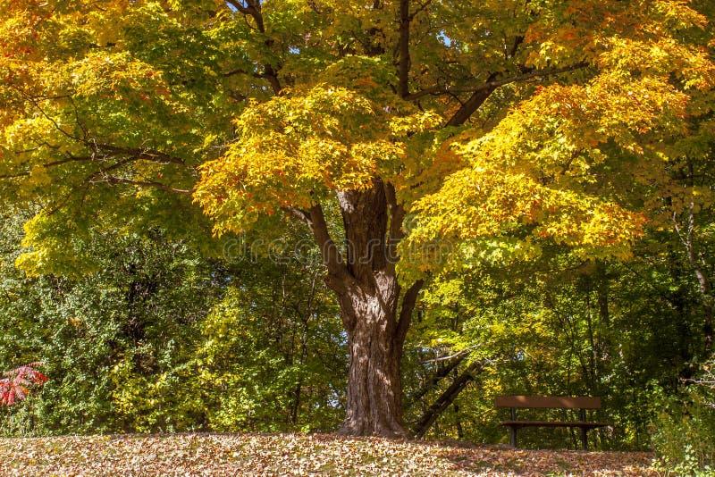 Banco de parque vacío debajo de un árbol en otoño fotografía de archivo