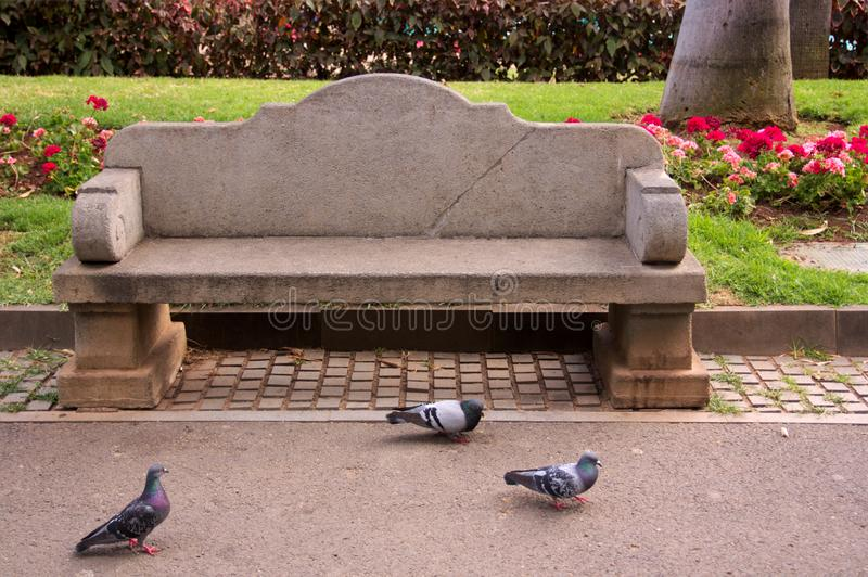 Banco de pedra em um parque com pombos ao redor imagem de stock royalty free