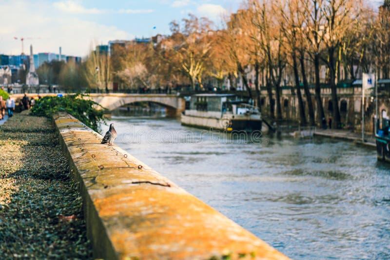 Banco de río Sena en París, Francia fotografía de archivo