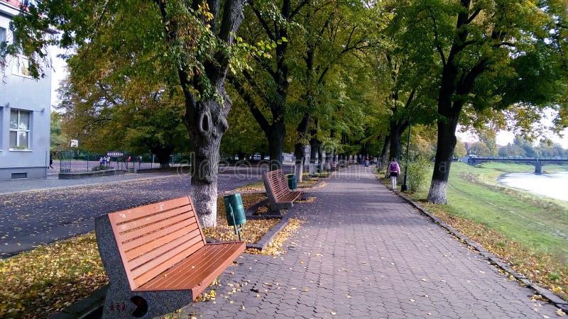 Banco de rio da cidade coberto pelas folhas amarelas foto de stock royalty free