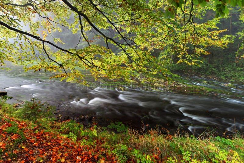 Banco de rio do outono ou do verão com folhas da faia O verde fresco sae em ramos à superfície da àgua faz a reflexão Noite chuvo imagens de stock royalty free