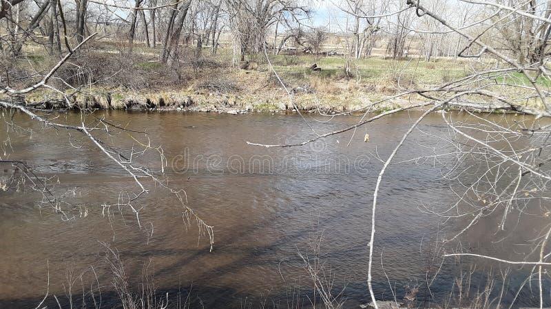 Banco de rio que negligencia as árvores com reflexões fotos de stock