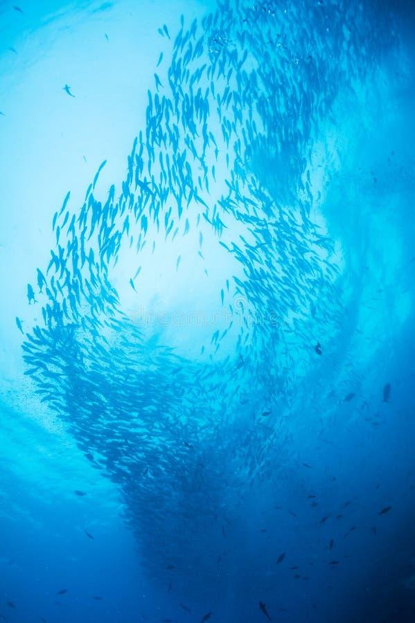 Banco dei pesci della presa fotografia stock libera da diritti