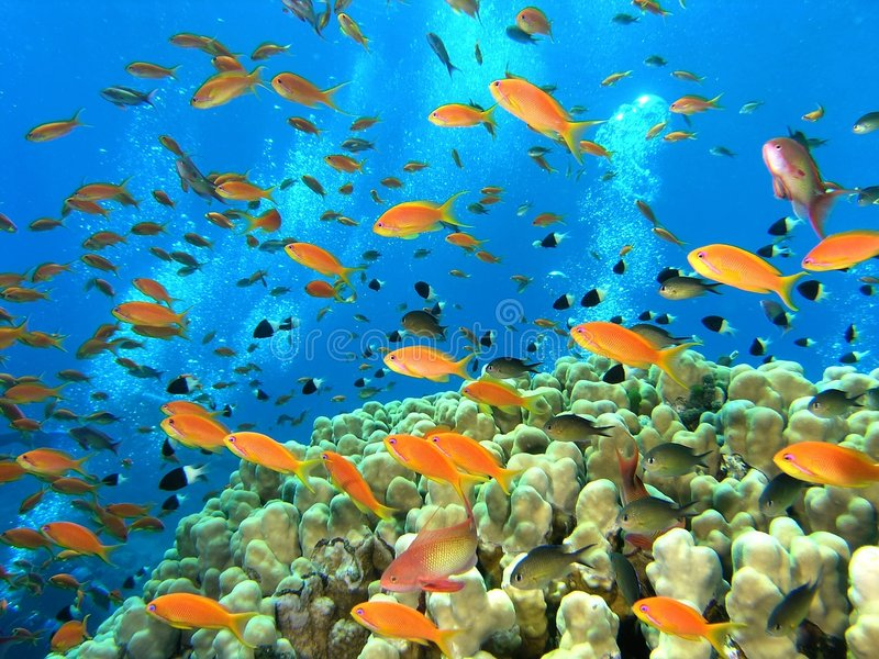 Download Banco Dei Pesci Sulla Scogliera Fotografia Stock - Immagine di flora, fauna: 7312024