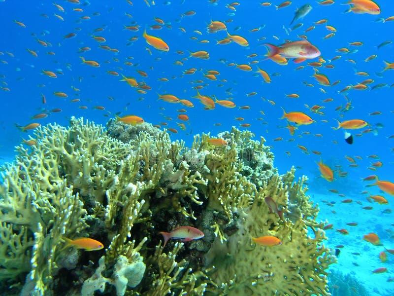 Download Banco Dei Pesci Sulla Scogliera Immagine Stock - Immagine di acqua, vita: 7312207