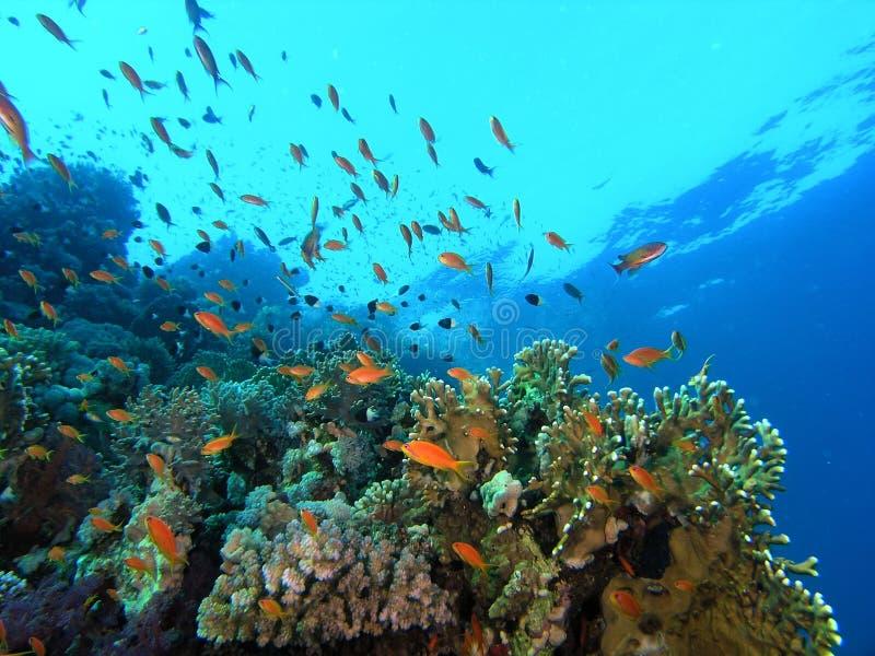 Download Banco Dei Pesci Sulla Scogliera Fotografia Stock - Immagine di radura, tuffo: 7312414