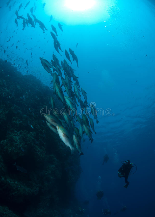 Banco dei pesci vicino alla parete di corallo fotografia stock