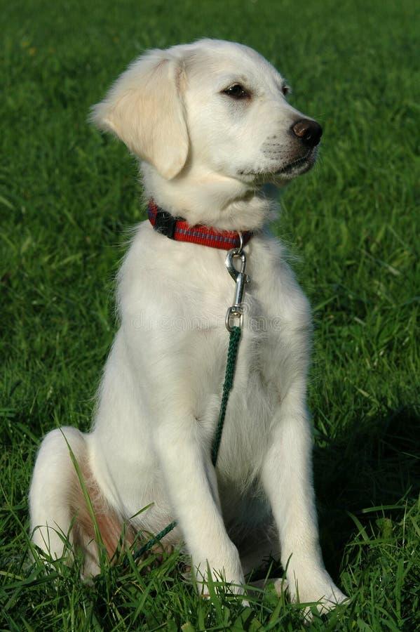 Banco del cane fotografia stock