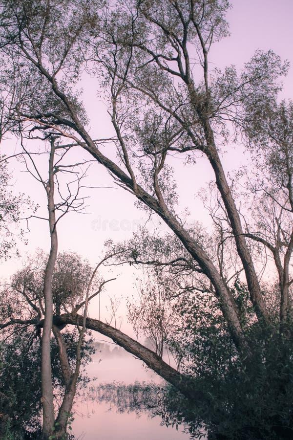 Banco del lago foto de archivo