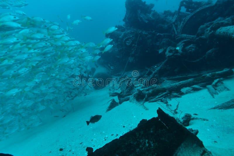Banco del pesce al relitto subacqueo fotografia stock libera da diritti