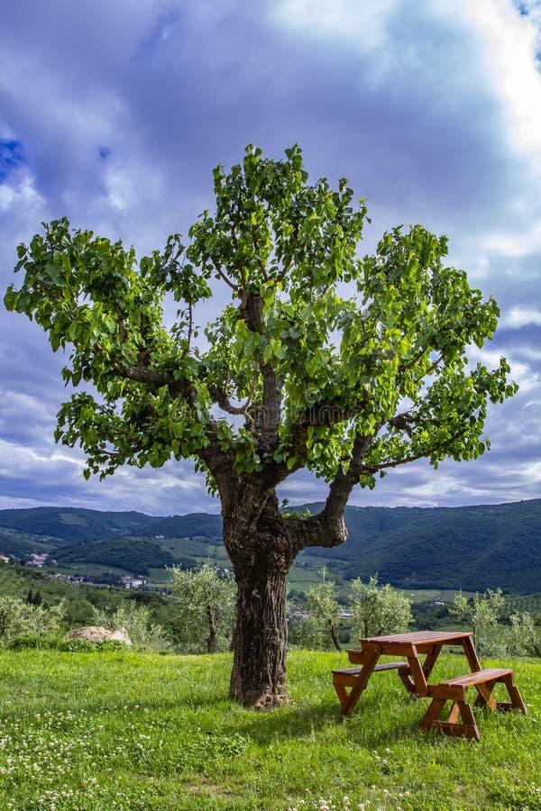 Banco di legno accanto ad un albero concetto del posto da rilassarsi immagini stock libere da diritti