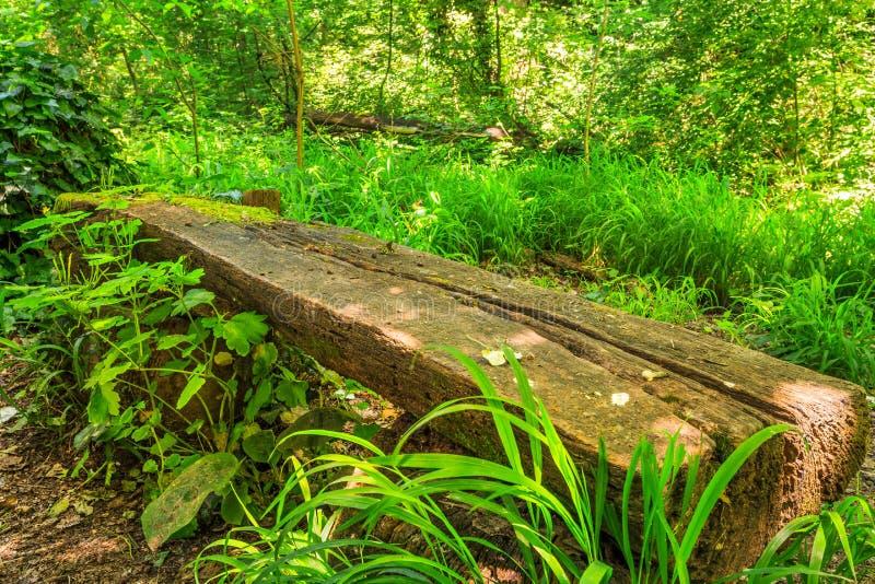 Banco di legno del parco immagini stock