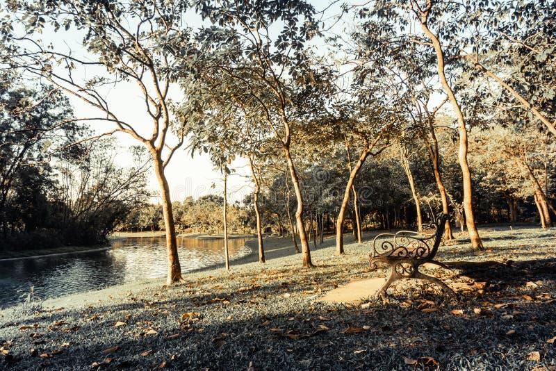 Banco di legno in parco al sole rilassarsi stile di vita del fondo di autunno della natura immagini stock