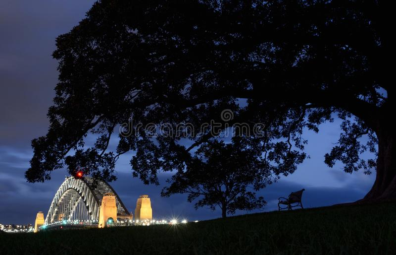 Banco di parco solo ed albero gigante all'osservatorio a Sydney che trascura il porto ed il ponte al crepuscolo immagini stock libere da diritti